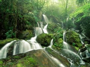 Natural scene