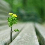 good deeds_nature
