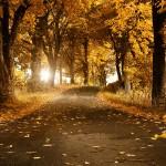 autumn-falling leaves