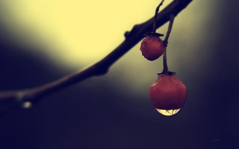 tree bears fruit