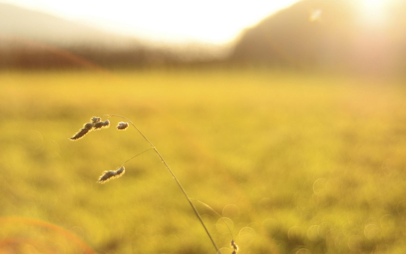 nature light