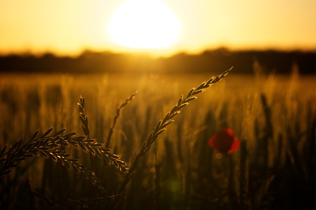 nature-field-sunrise